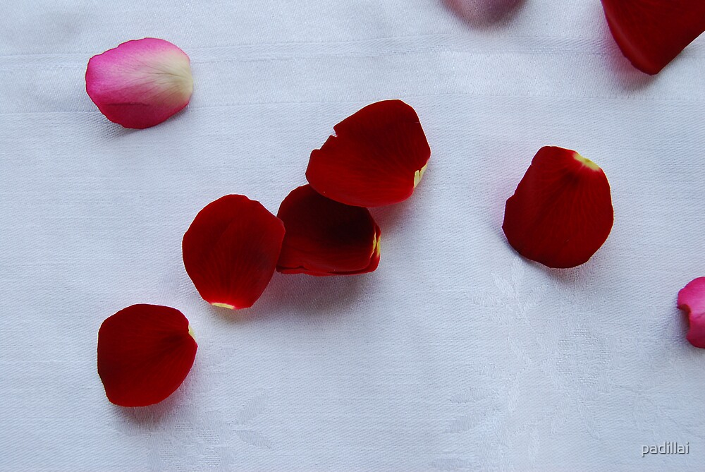 Passion Red Rose Petals by padillai