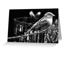 Birds in Madison Square Park, NYC Greeting Card