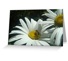 Hoverfly and Daisy Greeting Card