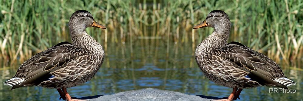ducks by PRPhoto