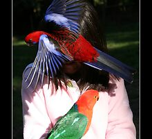 Parrot Picnic by dale rogers