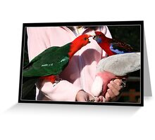 Parrot Squable II Greeting Card