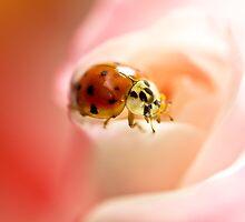 Ladybug VI by Leisa  Hennessy