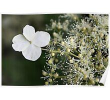 Fabulous flora Poster