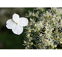 Fabulous flora Photographic Print