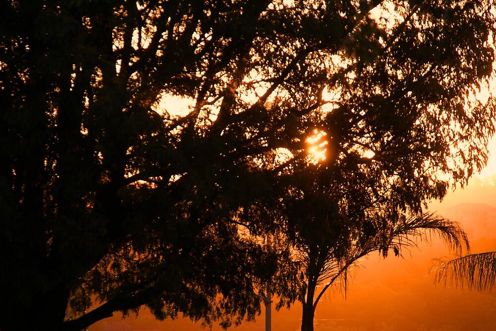 Summer Sunset by Wazi