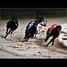 Greyhound Race by Adrian Richardson