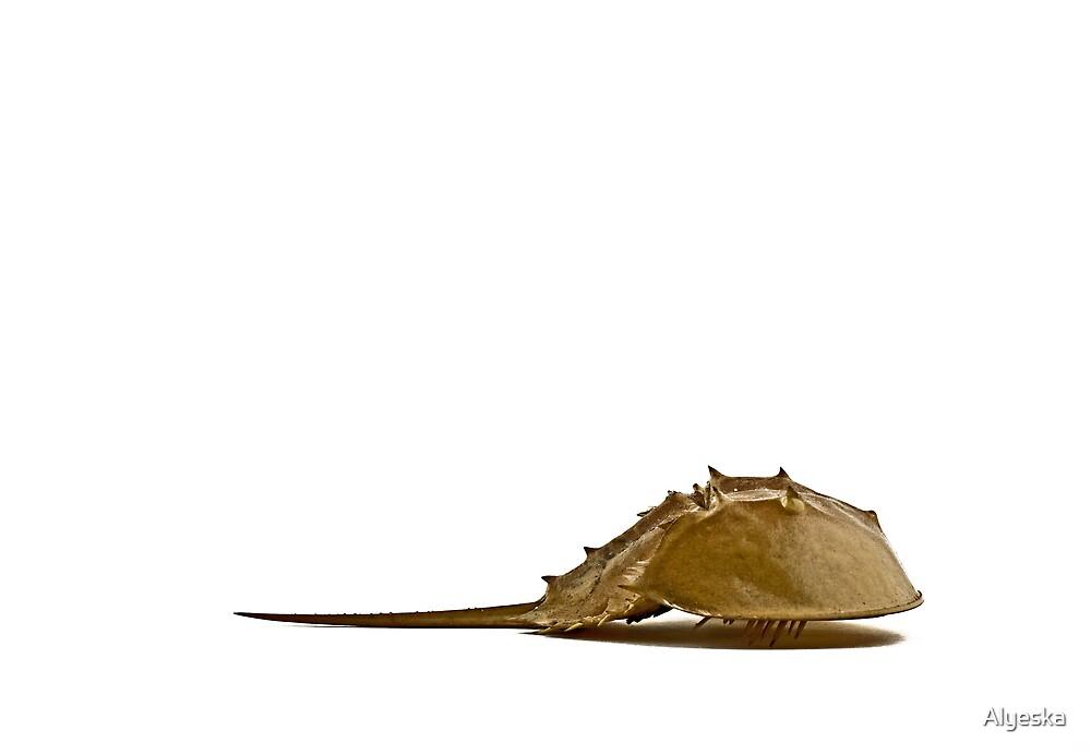 Horseshoe Crab by Alyeska