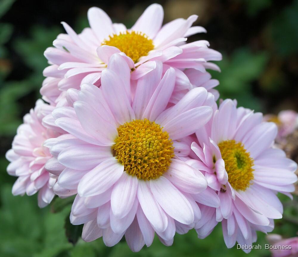Pink Petals by Deborah  Bowness