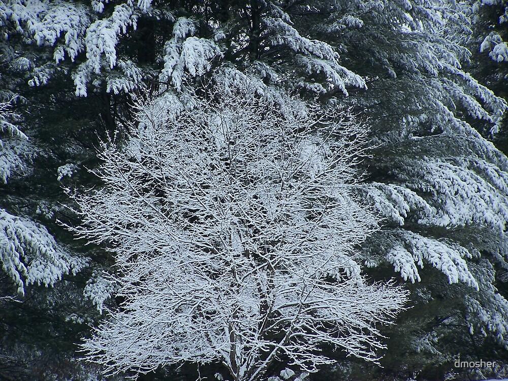 Winter Wonderland by dmosher
