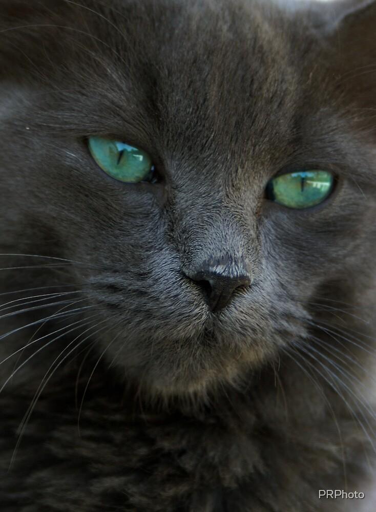 cat by PRPhoto