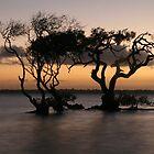 Twilight Trees by Grahame Clark