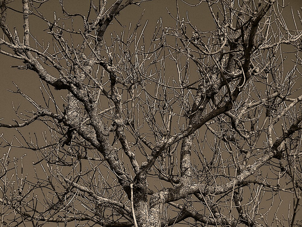 Brown Tree by Gene Cyr