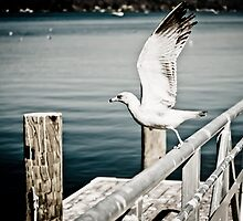 Seagull flying by MyNameIsNe0