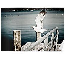 Seagull flying Poster