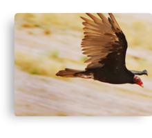 Fly Like a Turkey Vulture? Canvas Print