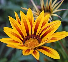yellow flower by odile