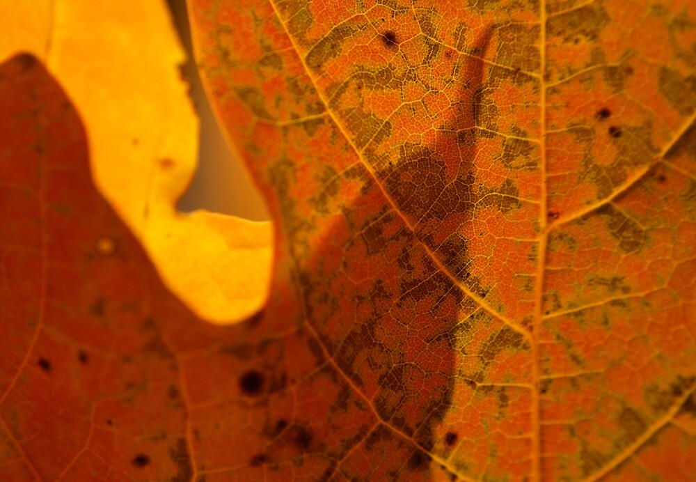 Leaf Deatail 2 by Rod  Adams