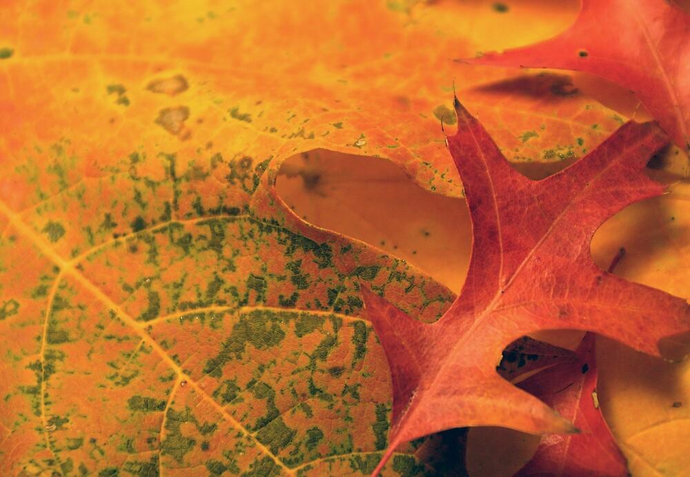 Leaf Detail 3 by Rod  Adams