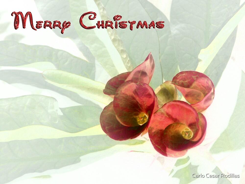Merry Christmas Card by Carlo Cesar Rodillas