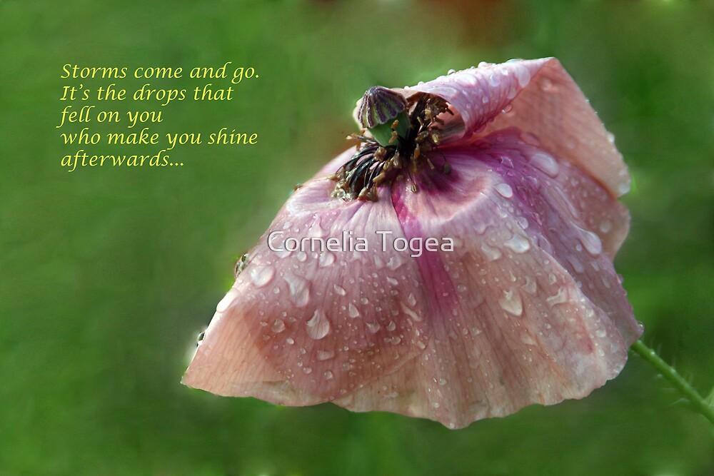 poppy after the rain by Cornelia Togea