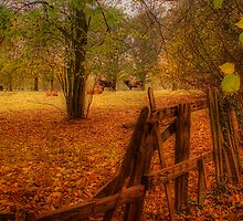 In the country by Martyn Starkey