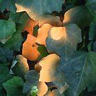 a shot of orange by Mark McGrath
