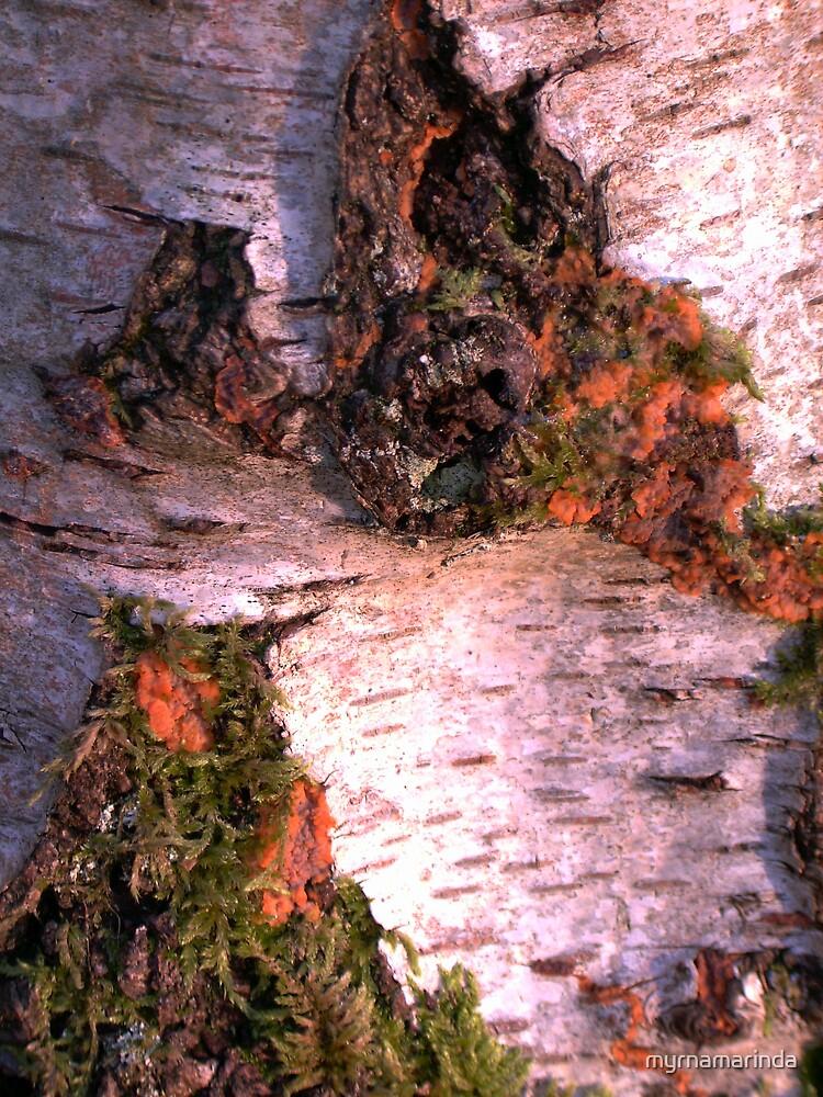 Beautiful Birch Bark by myrnamarinda