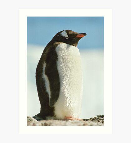 Gentoo Penguin Art Print