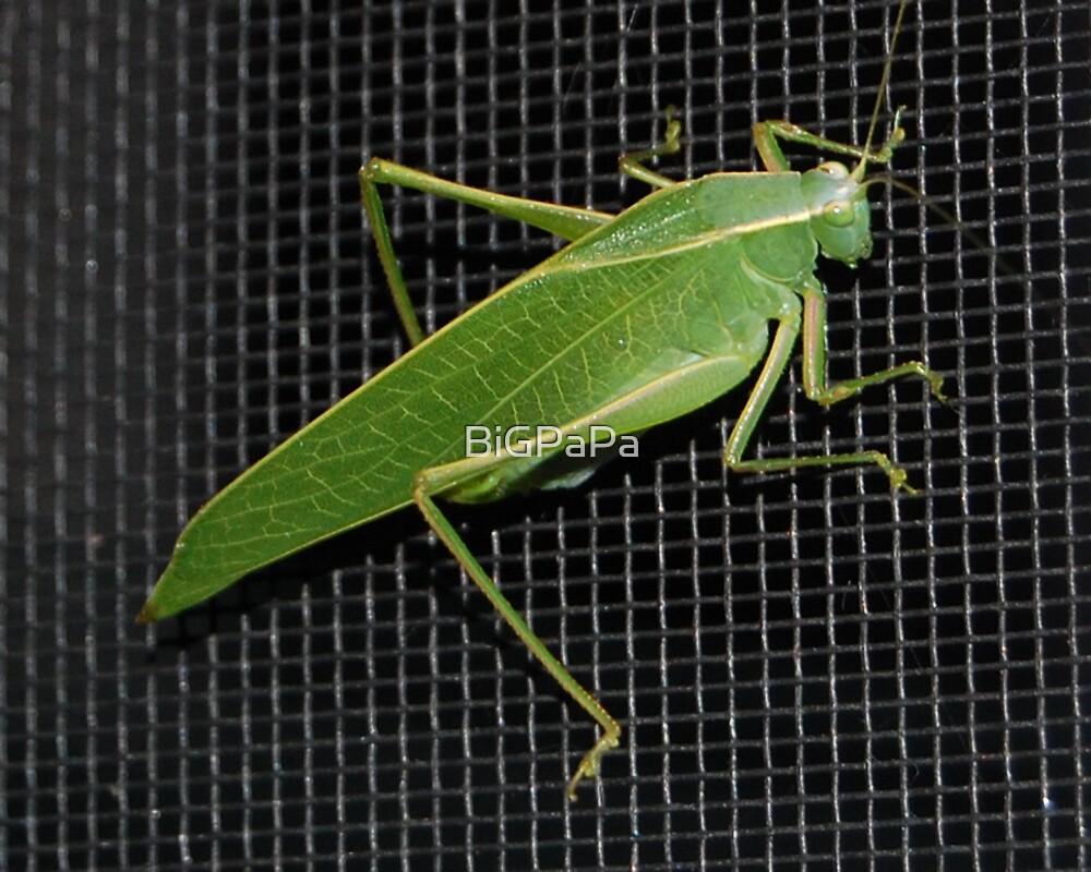 Grasshopper #2 by BiGPaPa