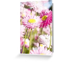 Everlastings Greeting Card