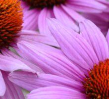 Purple Echinacea Sticker