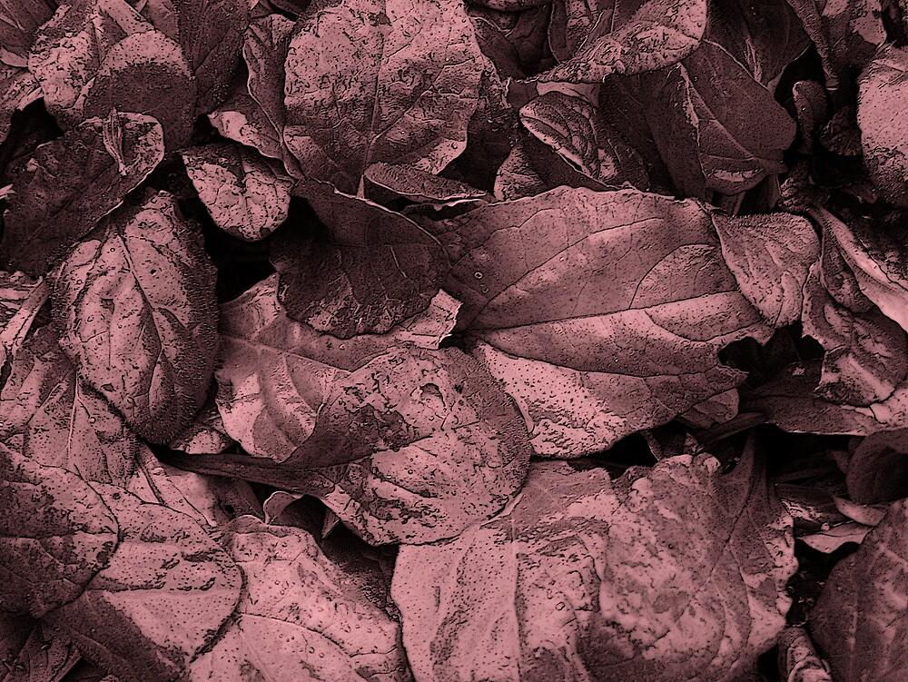 Dark Magenta Leaf by Gene Cyr