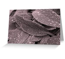 Fuzzy Leaf Greeting Card