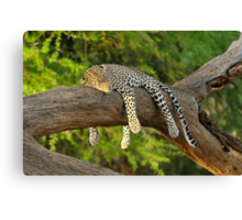The Leopard Sleeps Tonight Canvas Print