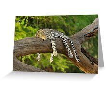 The Leopard Sleeps Tonight Greeting Card
