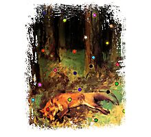 Degas' Dead fox in the forest by Ally Nix Photographic Print