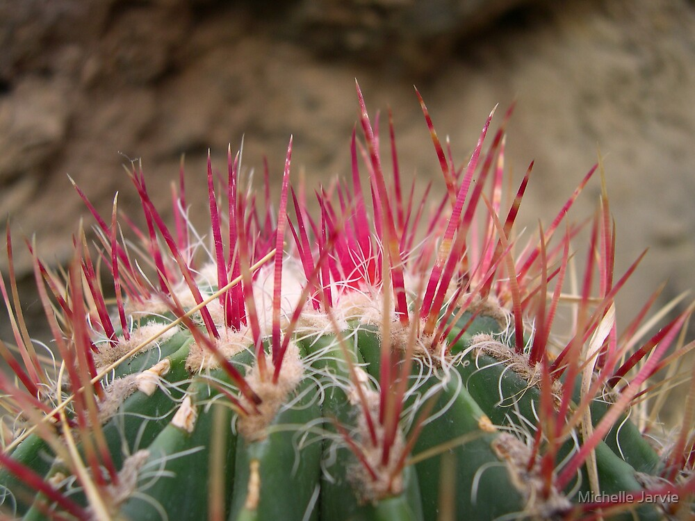 Cactus Needles by Michelle Jarvie