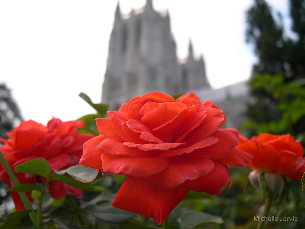 Cathedral Roses by Michelle Jarvie