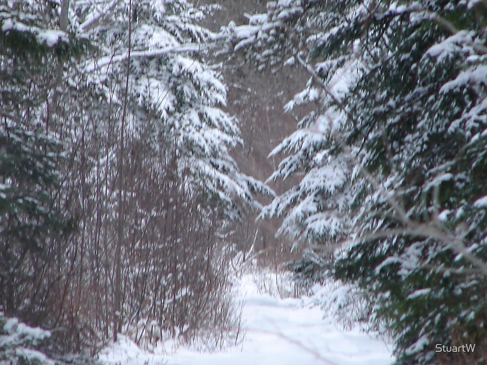 frist snow by StuartW