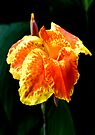 Phutaracsa by Dave Lloyd