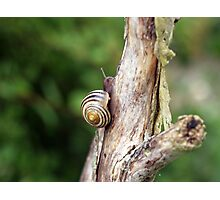 Swirls of the Snail Photographic Print