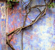 Honeysuckle Vine & Weathered Walls by Terri Foster