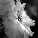 Gentle Hope by Lozzar Flowers & Art