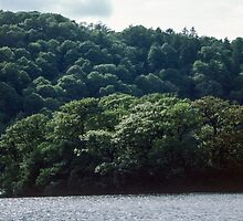 Windermere island at Bowness Lake District England 198405210011 by Fred Mitchell