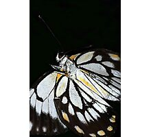 Butterfly Ball Photographic Print