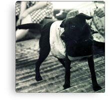 little punk dog Canvas Print