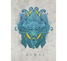 Jackal Photographic Print