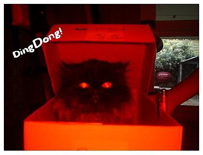 DingDong! by elizabethrose05