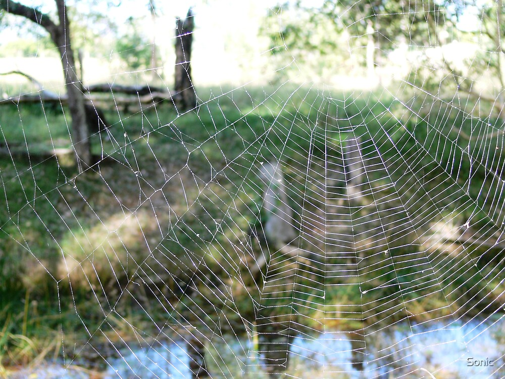 Web in the Bush by Sonic